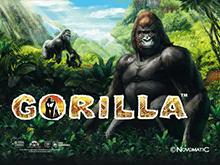 Автомат на деньги Gorilla